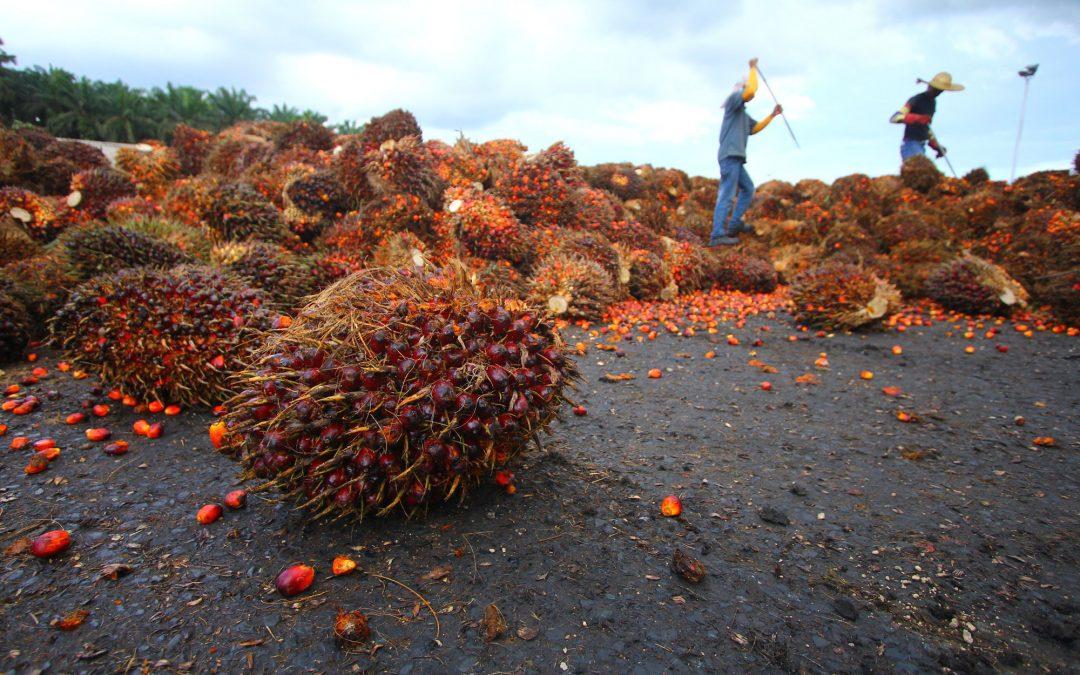 Palm Oil & RSPO