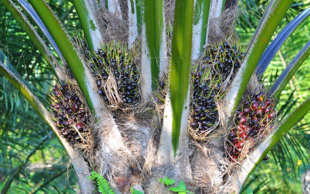 Mengendalikan Hama dan Penyakit Pada Perkebunan Kelapa Sawit